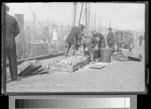 46 landing herring